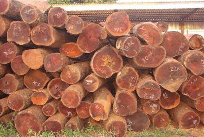 kinh nghiệm chọn sofa khung gỗ trắc